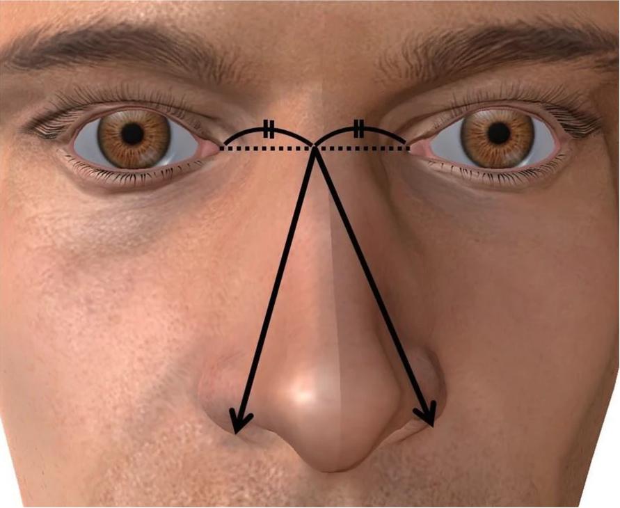 鼻子大GG就越大?日本研究「尺寸對照表」曝光!