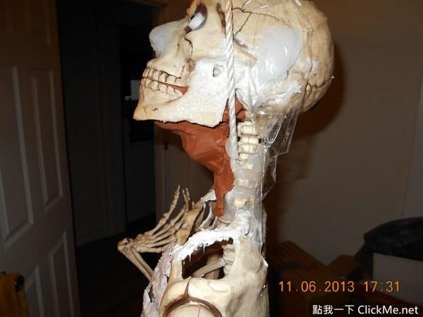 網友自製「擬真性愛娃娃」,人體煉成就從骨頭開始♥