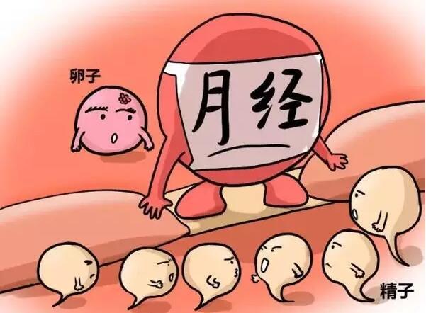 卵子蠢蠢的死法:憋死、無聊死、孤獨死......你還知道哪些?