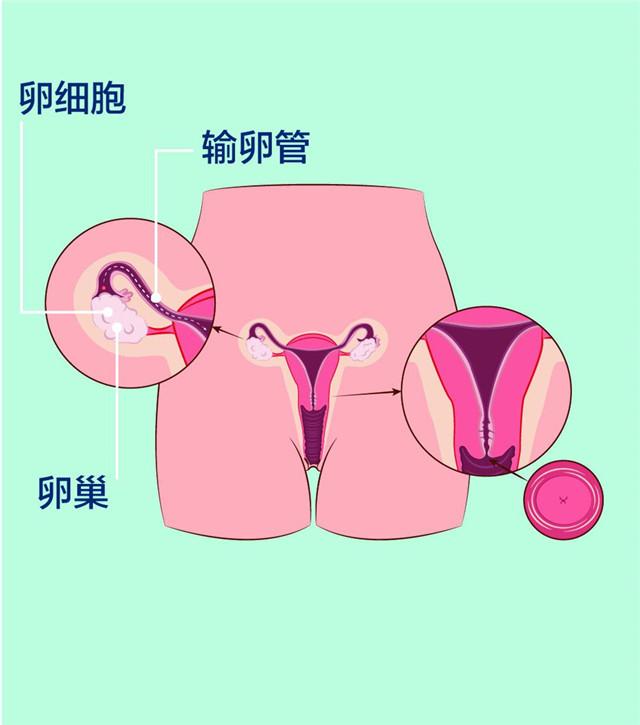 女人不能不懂自己的身體!你真的認識'小花園'嗎?(二)